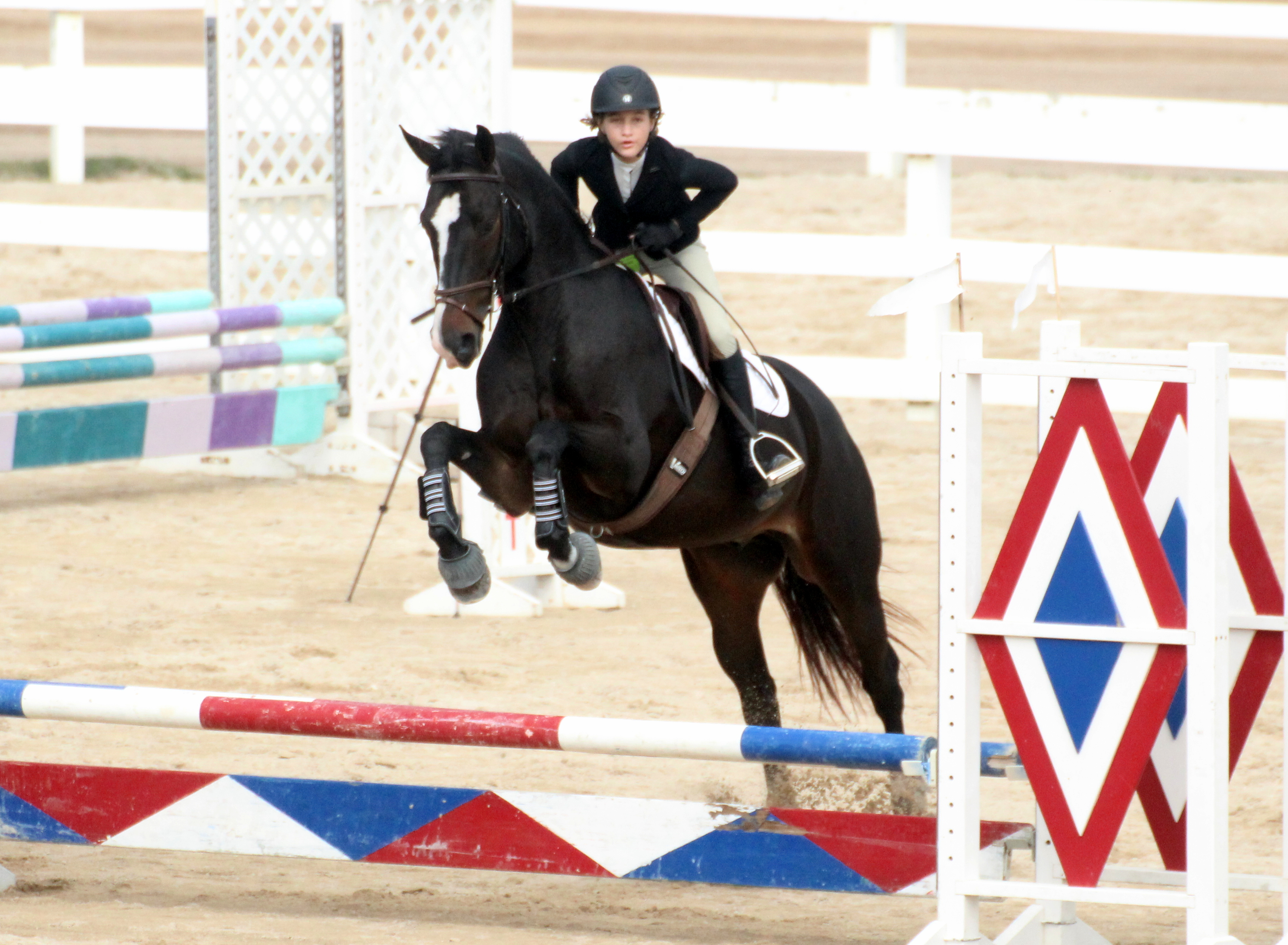 Bermuda Riders Turn in Strong FEI Provisional Results (Equestrian Events)